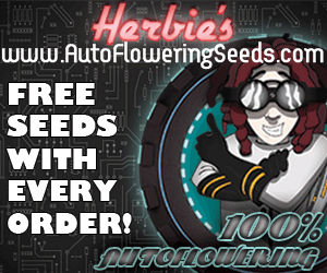 herbies autoflowering seeds
