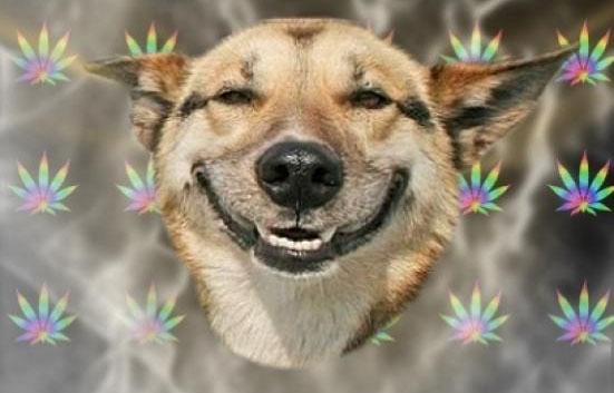 [Image: stoned-dog.jpg]