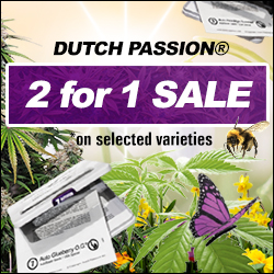 Access to the English Dutch Passion website