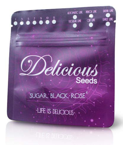 sugar black rose seeds